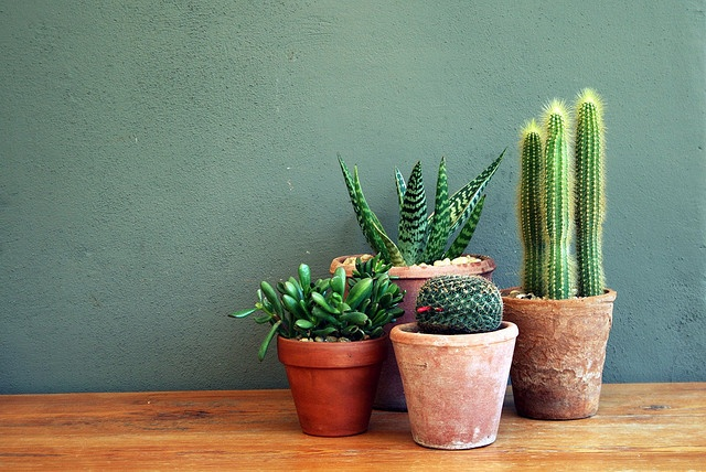 D polluez votre int rieur avec le cactus magazine - Huis exterieur model ...