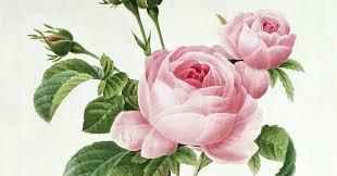 Le pouvoir des fleurs – Pierre-Joseph Redouté