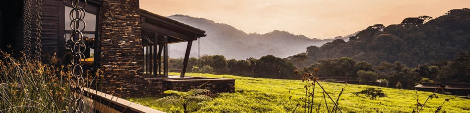 paysage de la reserve du resort Nyungwe House