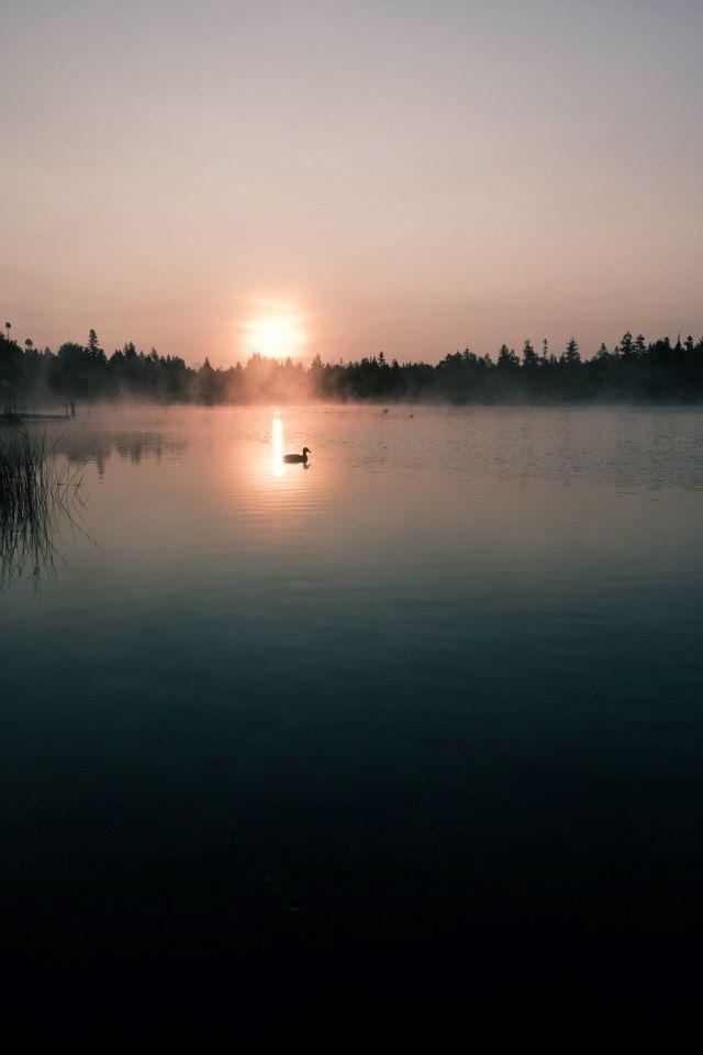 oiseau sur plan d'eau au couché du soleil