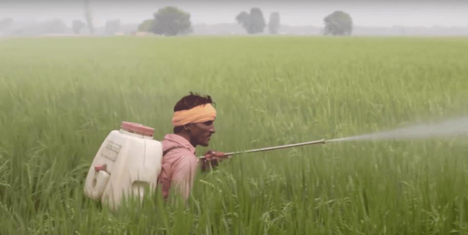 Un homme issu d'un pays en développement qui arrose de pesticides des plants de cotons, pour les utiliser afin de faire des vêtements. Consommer la mode responsable devient la solution.