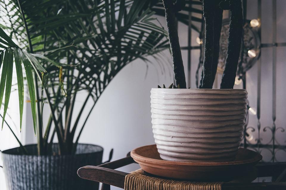 Quelles sont les plantes d'intérieur préférées des françaises ?