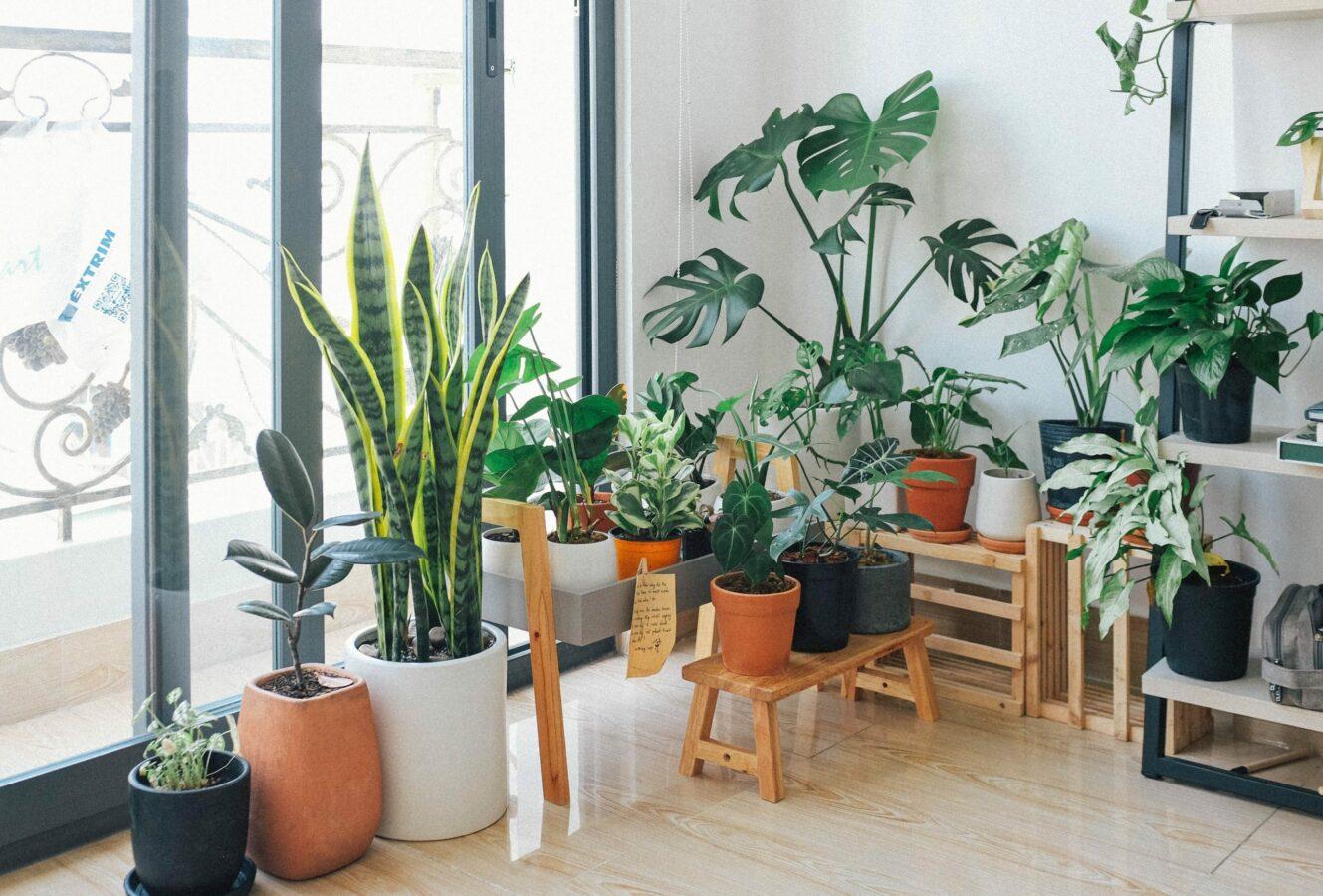 Les 5 plantes d'intérieur aux vertus médicinales !