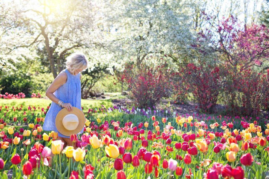 Les plus beaux parcs et jardins à visiter en France