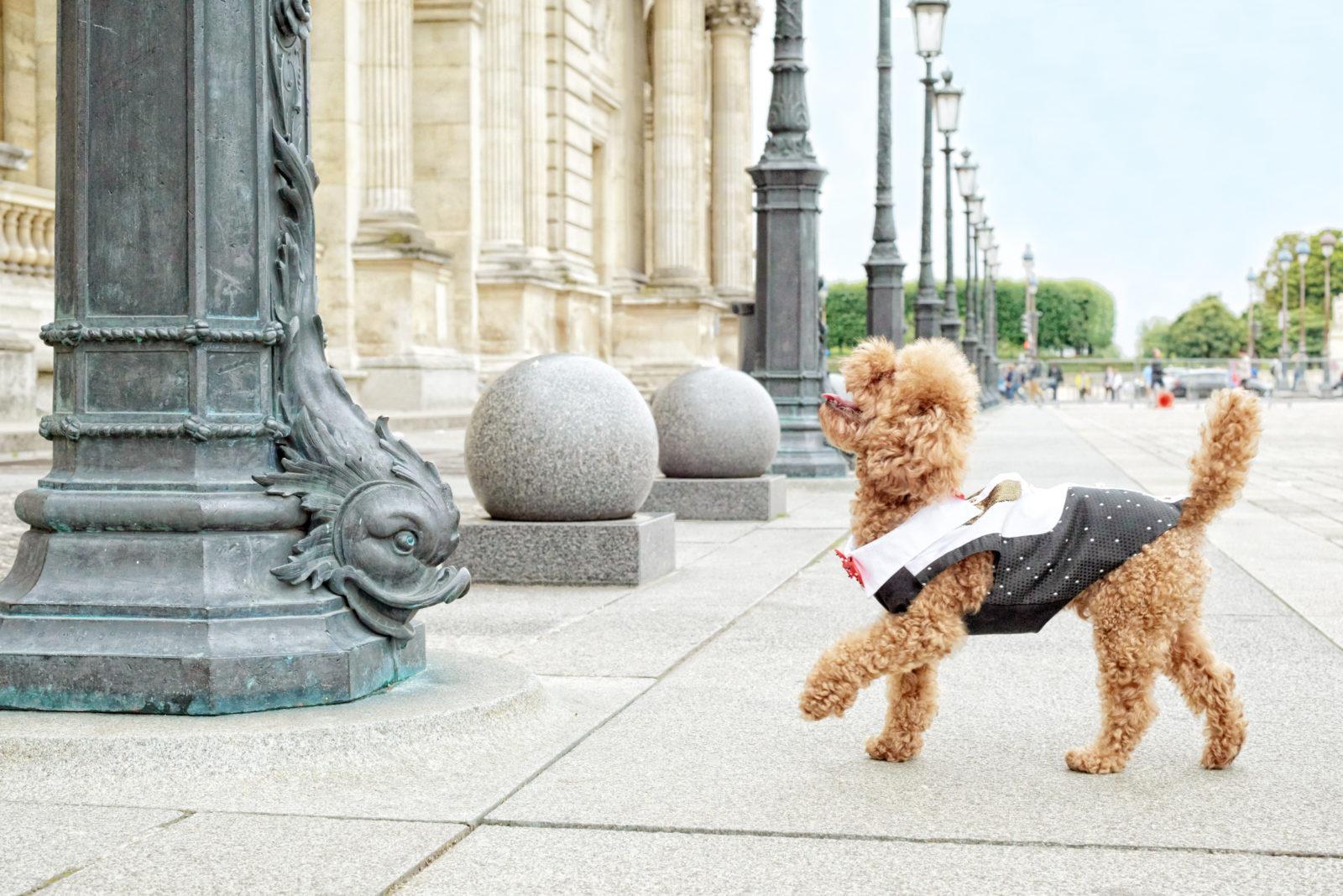 Diana & Toutouna vêtements de luxe et accessoires pour petits chiens - Ô Magazine