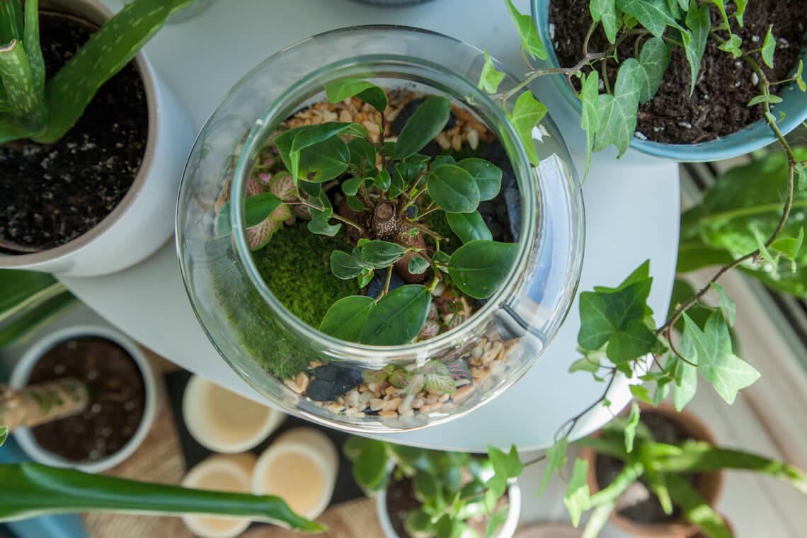 La Green Touch : créer votre terrarium DIY chez vous