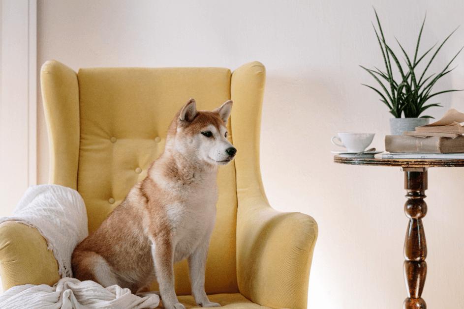 Osez le fauteuil club en tissu dans votre intérieur