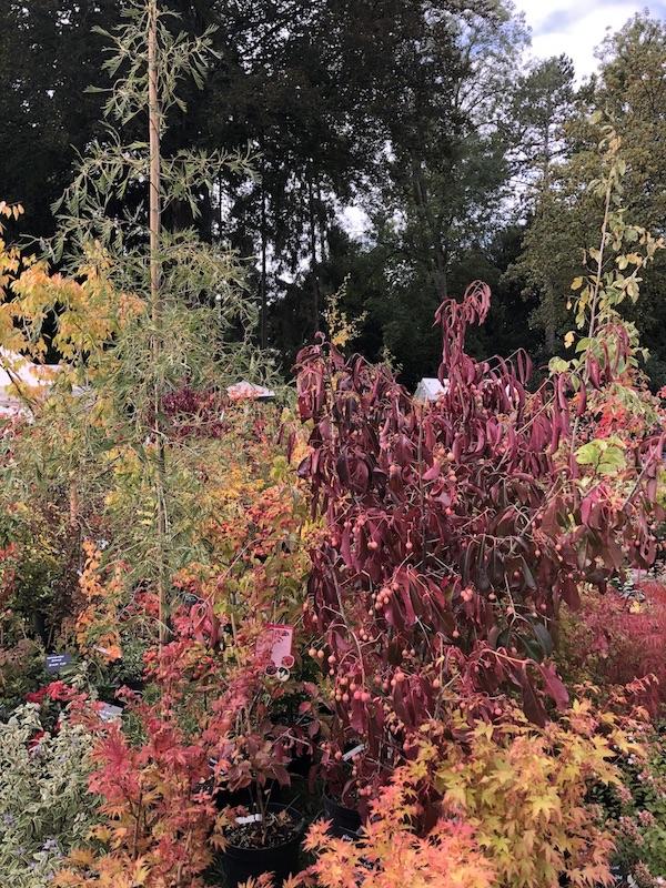 Journée des Plantes au Domaine de Chantilly