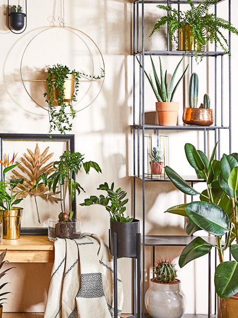 Déco tendances plantes