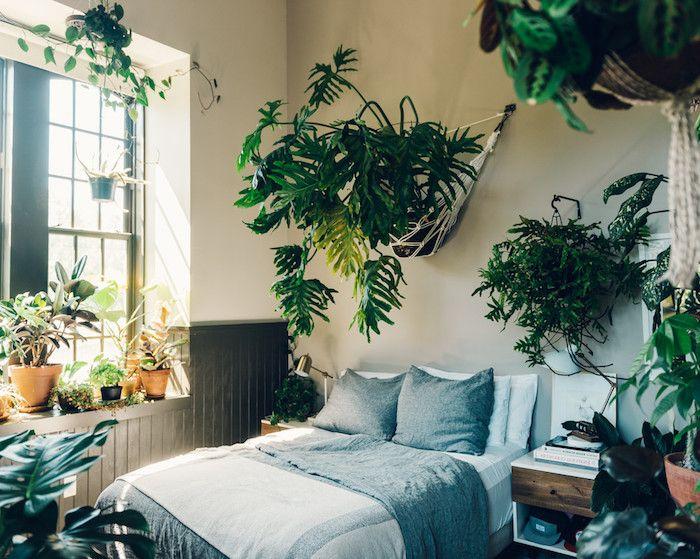 Les plus belles plantes d'intérieur pour une chambre cosy