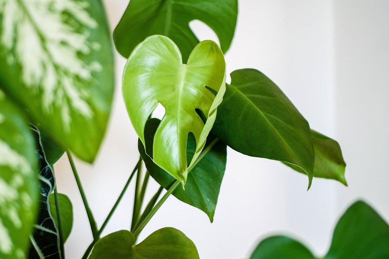 Les plantes ? On les aime un peu, beaucoup, passionnément !