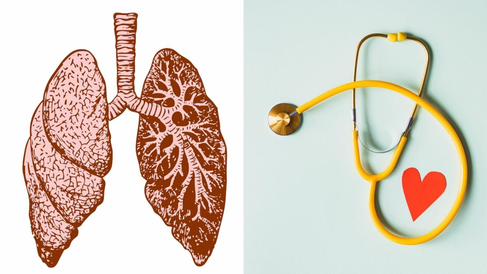 Cohérence cardiaque - Coeur et poumons - Ô Magazine