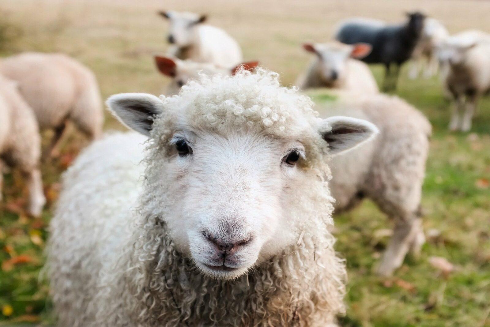 5 chiffres sur l'industrie d'élevage