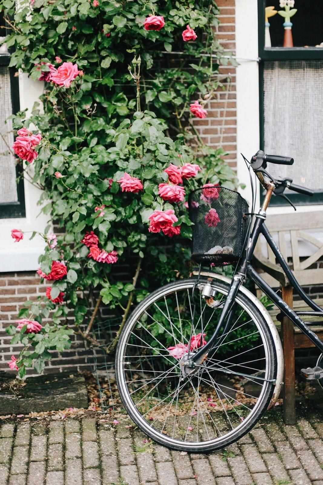 Qui n'a pas envie de sentir le vent caresser son visage, pendant une balade en forêt, au bord de la mer ou lors d'un trip en Europe ?… Et si vous choisissiez des vacances sportives, en excursion à vélo ? Découvrir une ville ou un pays en deux roues, une idée qui devrait plaire aux âmes écolos.