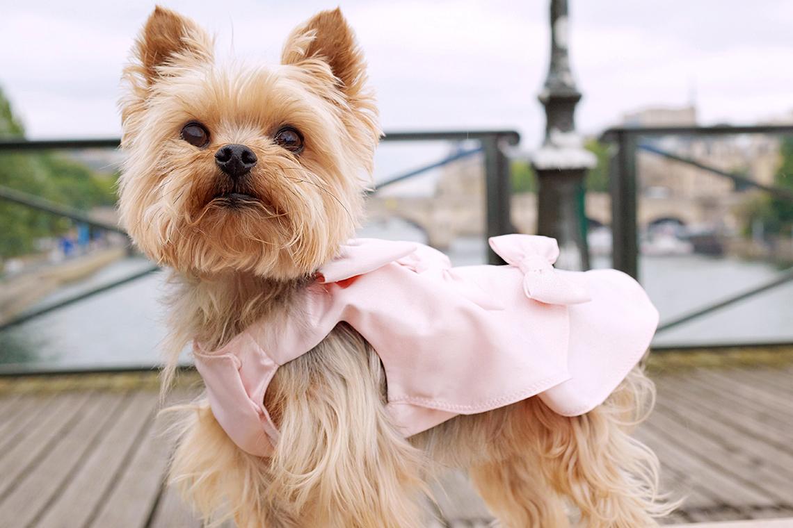 Diana & Toutouna : et si votre chien s'habillait avec des vêtements de luxe ?