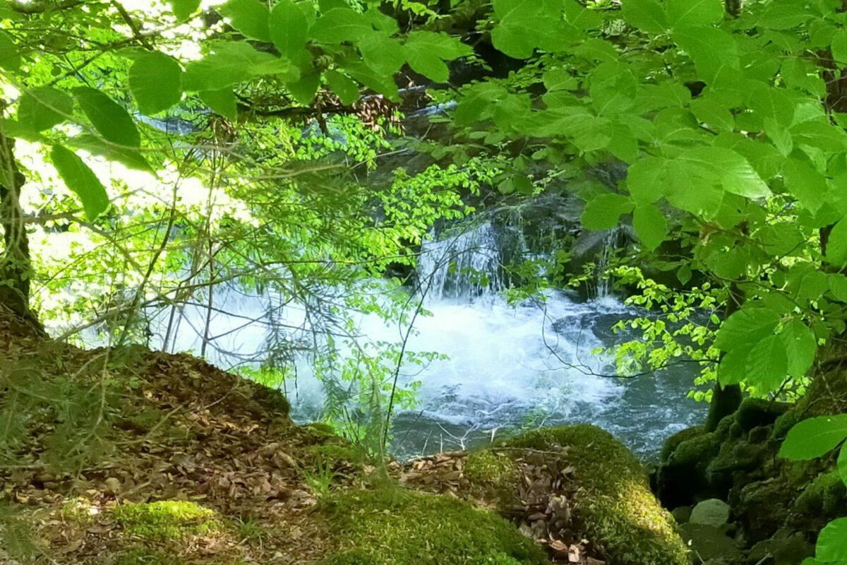 photo d'une rivière cachée par des arbres