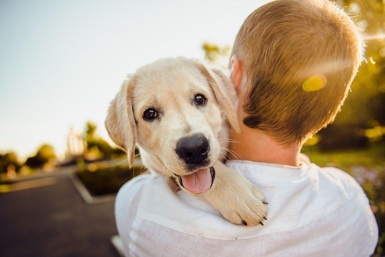 dresser son chien