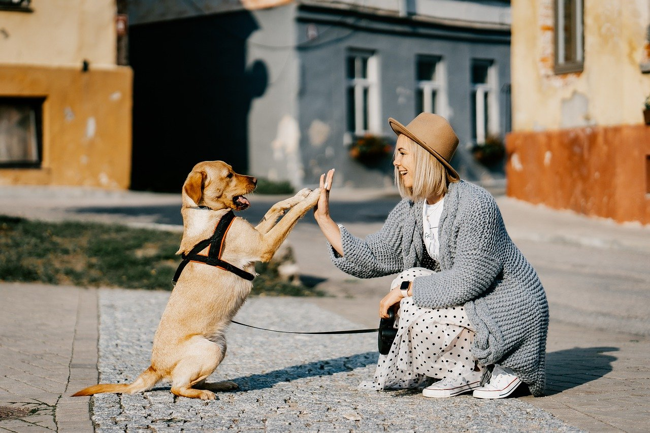 Bien dresser son chien : mode d'emploi